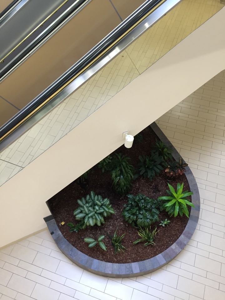 The view of a large, circular planter from the top of the escalator at Vallco Fashion Park in Cupertino, CA. A mirror on the side of the escalator captures the reflection of the cream-colored tile flooring.