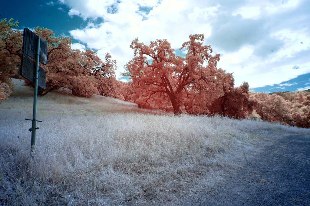 A color infrared image shows a location in Quicksilver County Park.  The trail is visible in the righthand corner, beyond it is yellow-whiteish grass.  A dual placard sign juts up on the righthand side of the image, with the writing facing away from us.  In the background are peach and peachy-pink trees.  The sky is a deep blue and clouds are taking up most of the sky space in the image.