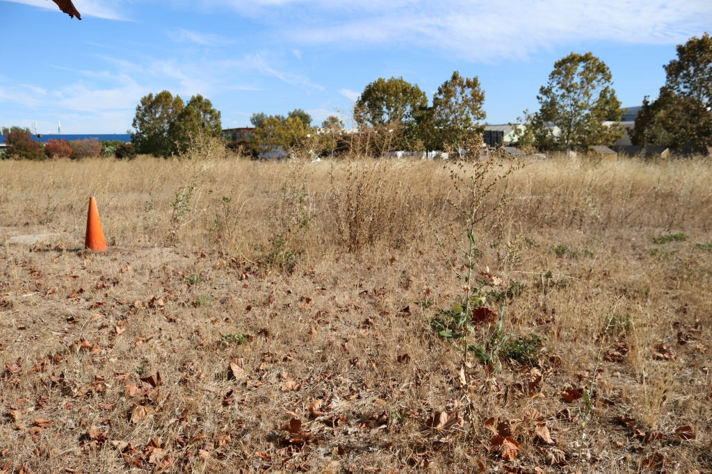 "the photograph is 3/4 full of ""ground zero"" of the triple site.  It is covered in mostly dead weeds and leaves.  A bright orange cone sits to the left, and the background is littered with fall trees."